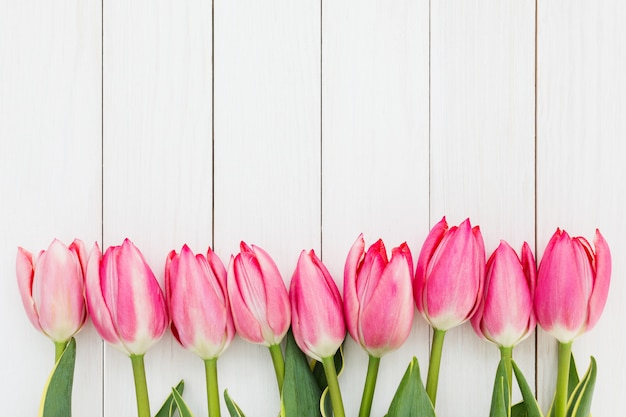 Border of pink tulips on white wooden background.