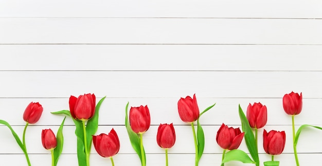 Border of red tulips on white wooden. mothers day, valentines day, birthday celebration concept. copy space for text, top view