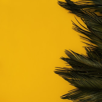 Border tropical palm on yellow with copyspace
