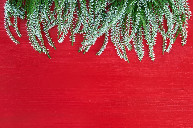 Border of white common heather on red background. copy space, top view.