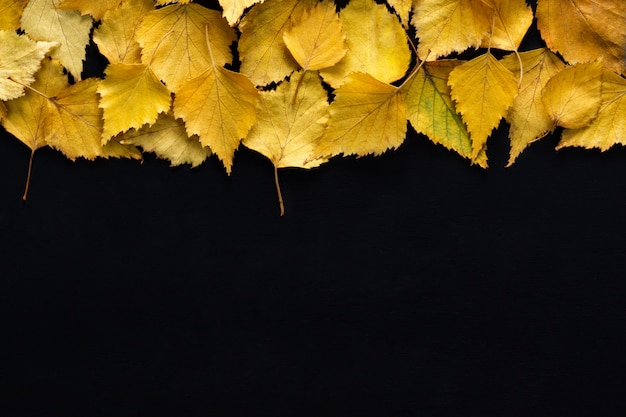 Border of yellow birch leaves with  on black background