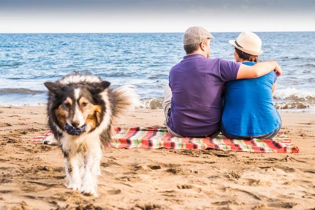 지루한 개 보더 콜리는 해변에서 모래와 바다를 가지고 놀고 싶어합니다. 사랑에 빠진 주인 남자와 여자는 해안과 파도 근처에 앉아 있습니다. 사랑 개념 함께 부부와 대체 가족