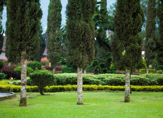 Botanic garden in bali