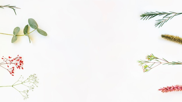 Botanical background with branches on sides