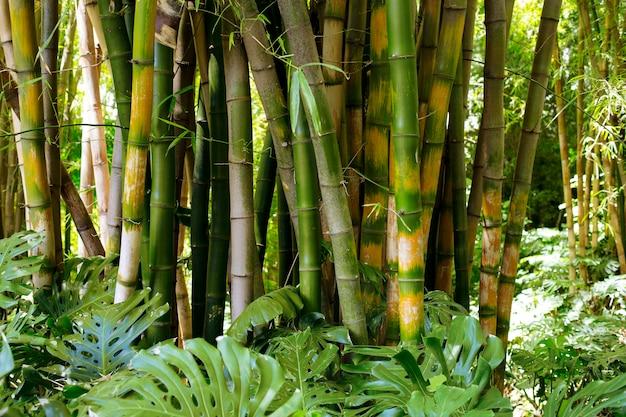 대낮에 식물 대나무 숲