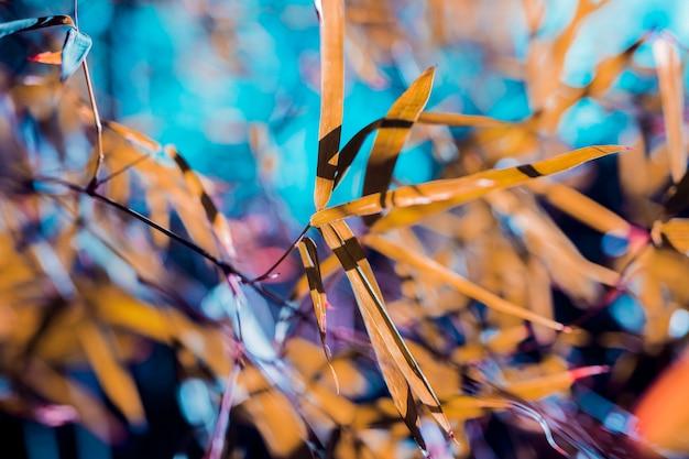 Foglie di bambù botanico