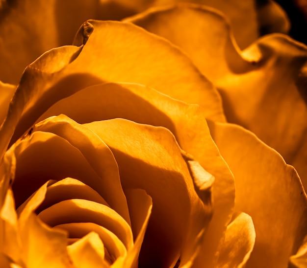 植物の概念の招待カードソフトフォーカス抽象的な花の背景黄金のバラの花マクロ