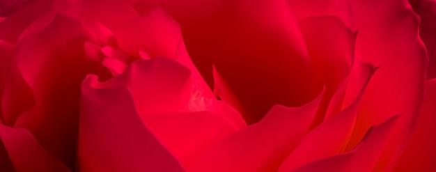植物の概念、招待状-ソフトフォーカス、抽象的な花の背景、赤いバラの花。ホリデーブランドデザインのマクロ花の背景