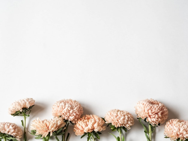 Botanical floral border of autumn seasonal flowers - peach asters on  white background. top view. copy space