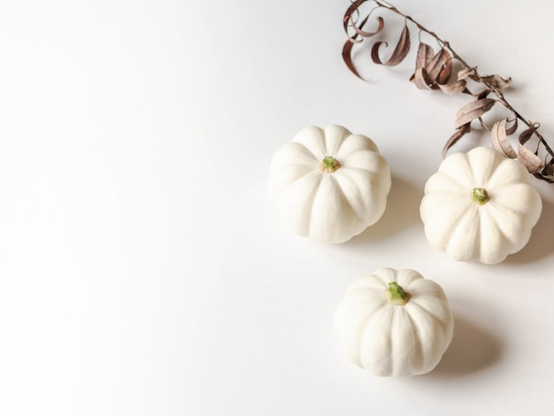 Botanical floral composition of autumn decorative white pumpkins on white background. copy space