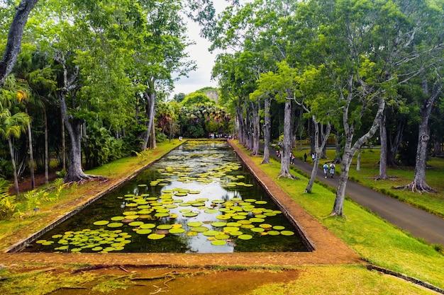 Ботанический сад на райском острове маврикий. красивый пруд с лилиями. остров в индийском океане.