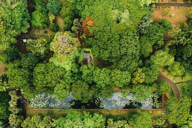 Botanical garden on the paradise island of mauritius.