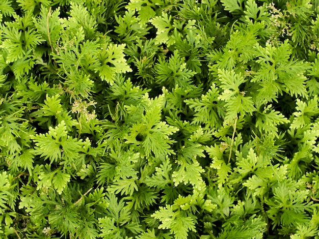Botanical green plants leaves dark background