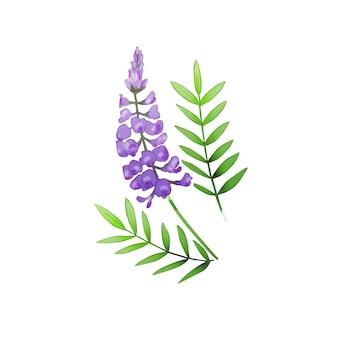 Ботаническая иллюстрация цветка. фиолетовый цветок и зеленые листья. рука нарисованные дикорастущие растения, изолированные на белом.