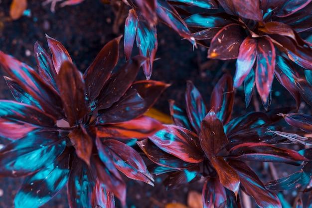Ботанические листья