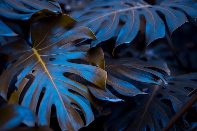 Botanical monstera leaves
