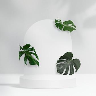 식물 제품 배경, monstera 잎