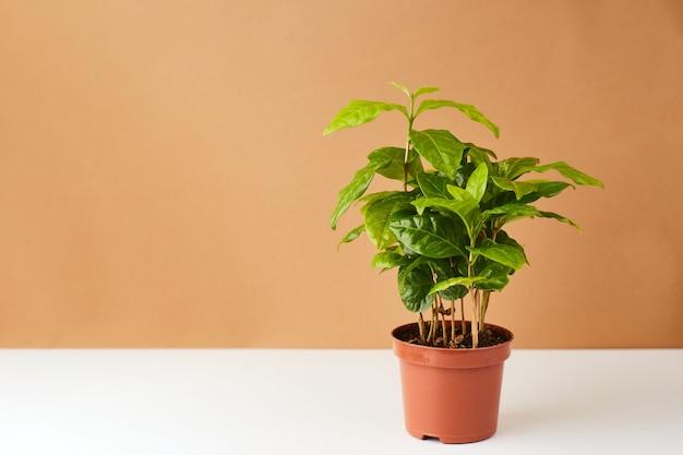 植物の表面