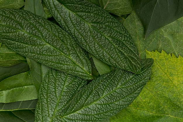 Botanical variety of leaves background