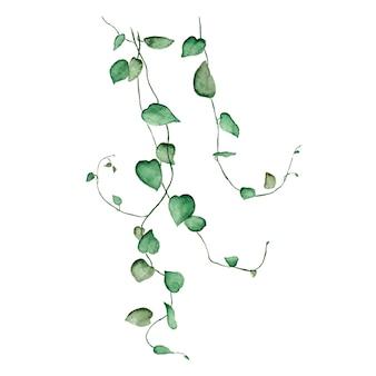 葉とリアナ枝の植物水彩クリップアートイラスト