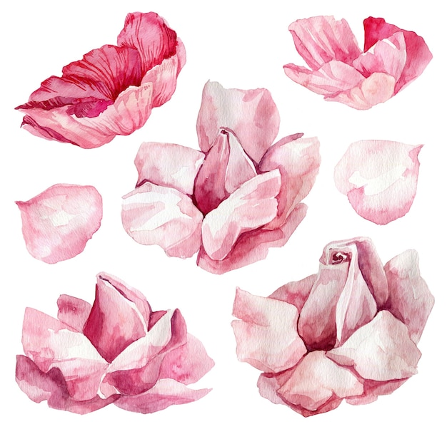 植物の水彩イラスト、花の要素、イソギンチャク、ラナンキュラ、バラ
