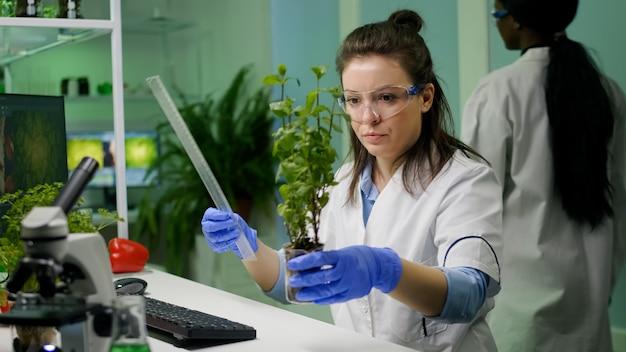 植物学者の研究者が植物学実験のために苗木を測定する