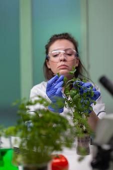 식물학자 연구원 여성은 농업 실험을 위해 유기농 식물을 분석하는 유전자 돌연변이를 관찰하는 녹색 묘목을 조사합니다. 생물 약학 실험실에서 일하는 화학자.