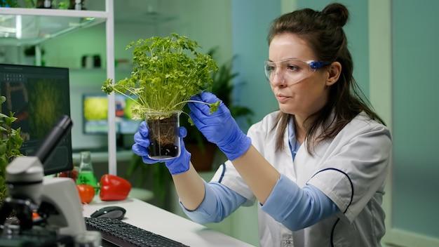 식물학자 연구원 여성은 농업 실험을 위해 유기농 식물을 분석하는 유전자 돌연변이를 관찰하는 녹색 묘목을 조사합니다. 생물 약학 실험실에서 일하는 화학자