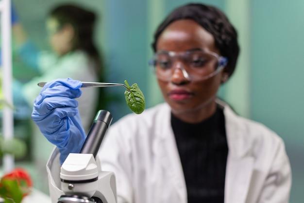 페트리 접시에서 잎 샘플을 채취하는 식물학자