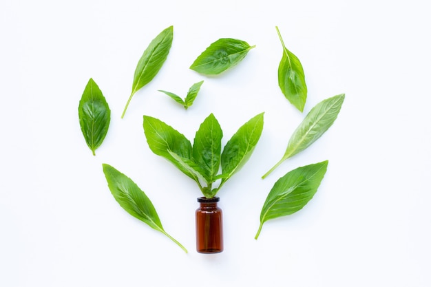 A bottle of essential oil with fresh basil leaves on white