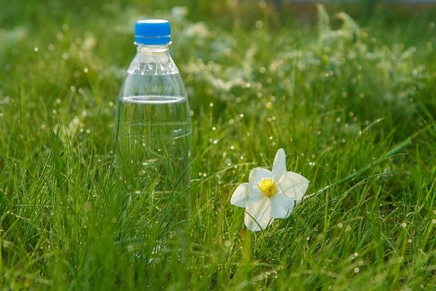 Бутылка минеральной воды и нарцисс белого и желтого цвета на зеленой траве с каплями росы ранним утром