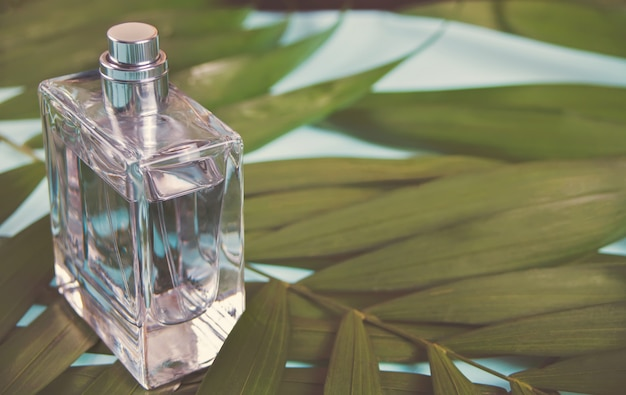 Bottle of perfume on the green palm leaf