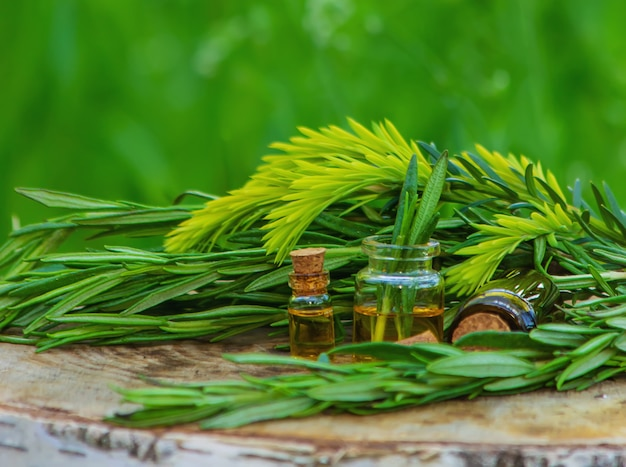 A bottle of rosemary oil on a tree stump. essential oil, natural remedies. nature. selective focus