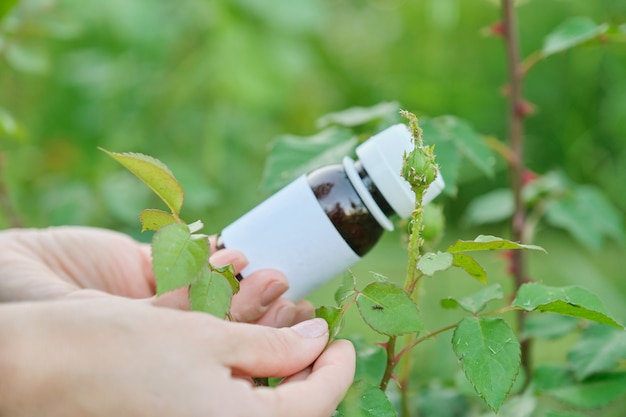 Bottle with chemical insecticide in the gardeners hand close-up