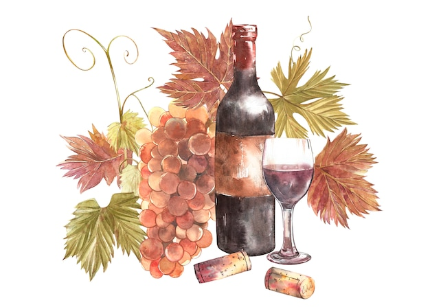 Bottles and glasses of wine and assortment of grapes, isolated on white background. hand drawn watercolor illustration.