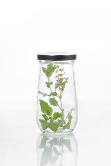 Bottles plant of tree on white background