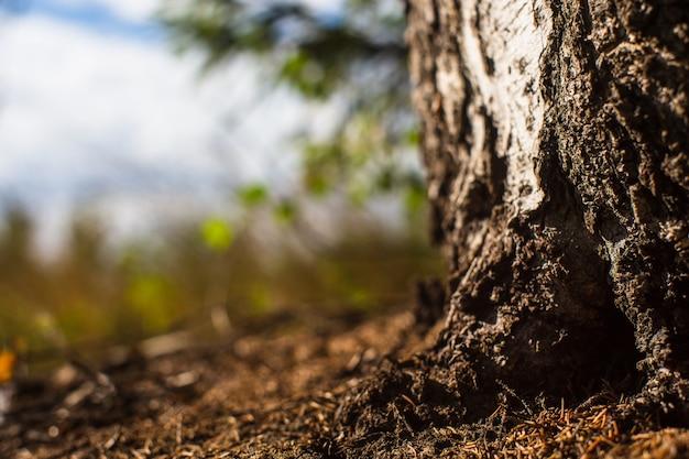 晴れた夏の日の森の端にある木の底。地面からの短縮。スペースをコピーします。