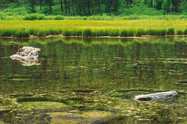 石と苔のある山の湖の沼沢地の背水の底