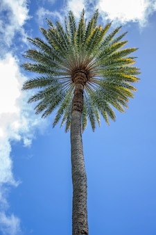 Bottom-up view of a palm tree with blue sky