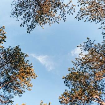 森の木々の底面図