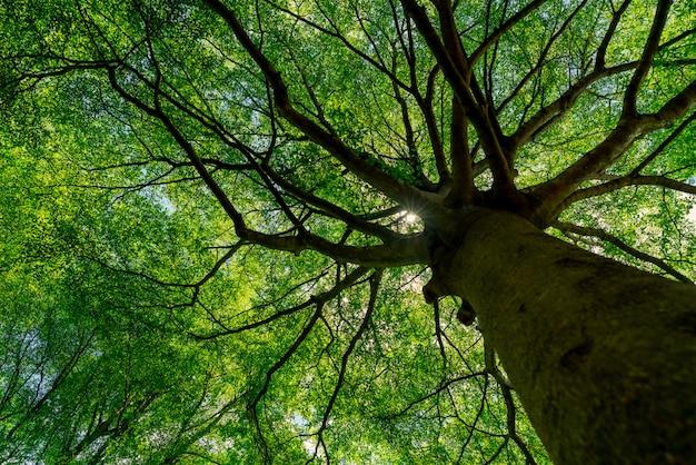 日光と熱帯林の大きな木の緑の葉の底面図