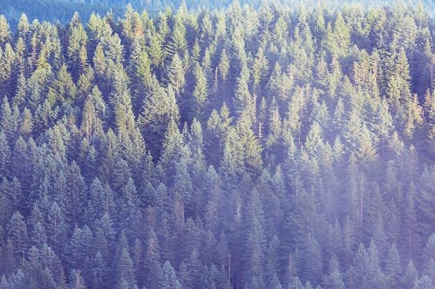 春の森の背の高い木の底面図