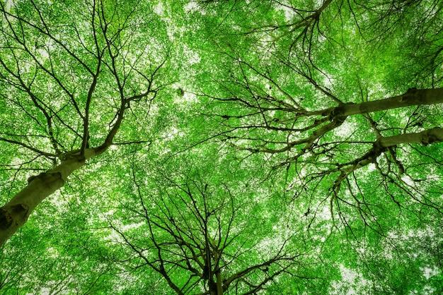 Вид снизу ствола дерева на зеленые листья большого дерева в тропическом лесу с солнечным светом. свежий воздух.