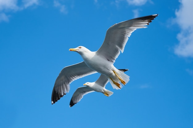 Bottom view of seagulls flying