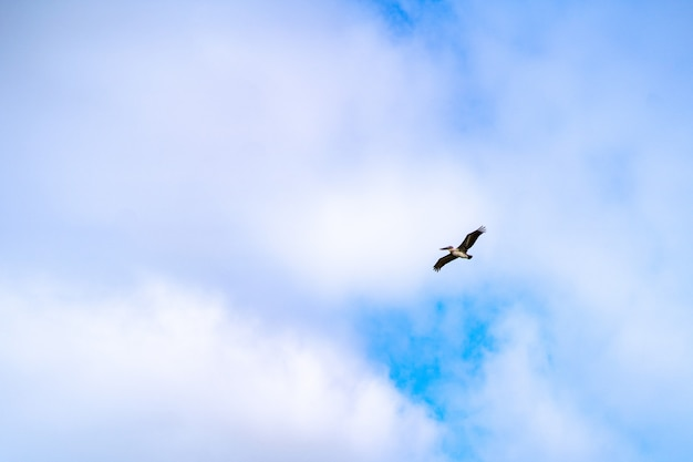 Bottom view shot of a gull flying in the cloudy sky