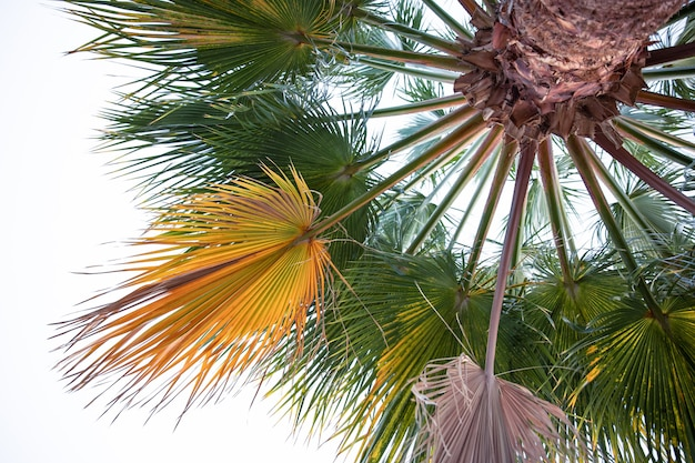 Bottom view of textured palm branches. exotic vegetation of egypt.