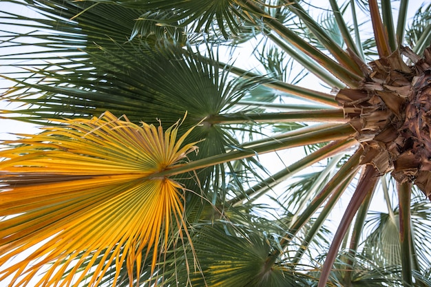 Bottom view of textured palm branches.