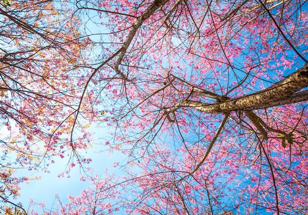 Bottom view of tree with pink flowers