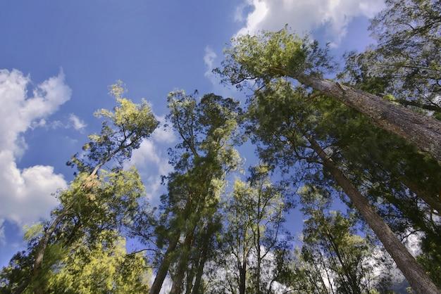 Bottom view of trees on mount rinjani