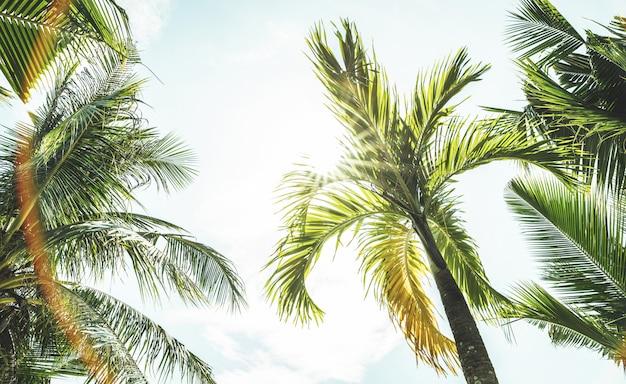 Bottom子の木とビーチからの空の底面図
